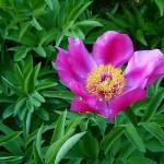 flower-350493_640